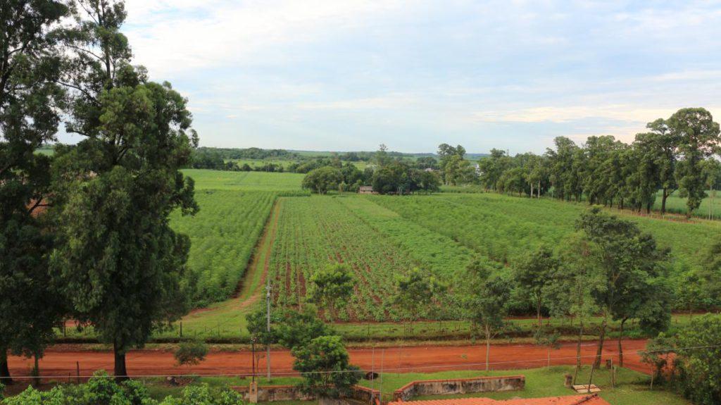 Plantación Yguá, en Piribebuy, Paraguay.