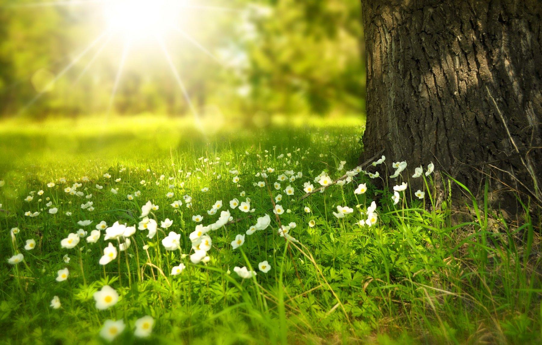 Más del 50% de la población ve como sus niveles de energía se ven reducidos con la luminosa llegada de la primavera.