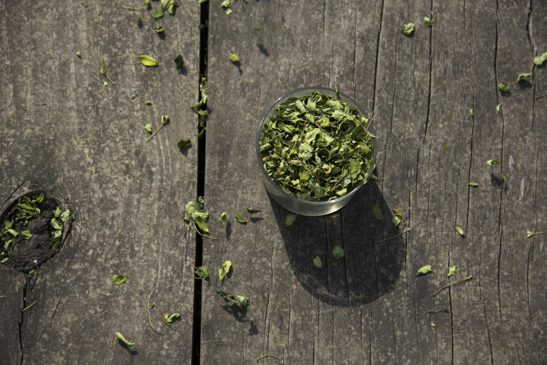 Hojas de Moringa, superalimento vegetal rico en proteína completa.
