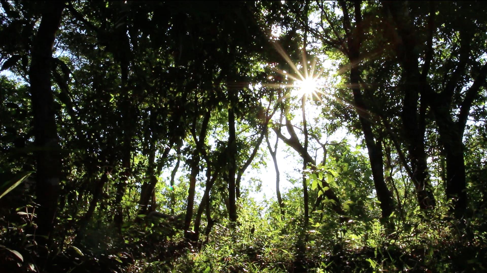 Nuestro medio ambiente natural es indispensable para nuestra subsistencia, y su salud está directamente relacionada con la nuestra.