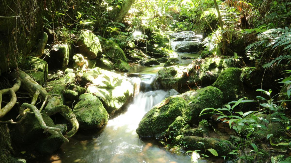 Las investigaciones de Bertoni en plena naturaleza paraguaya han impulsado enormemente las ciencias naturales. En la imagen, arroyo de Piribebuy, en Paraguay.