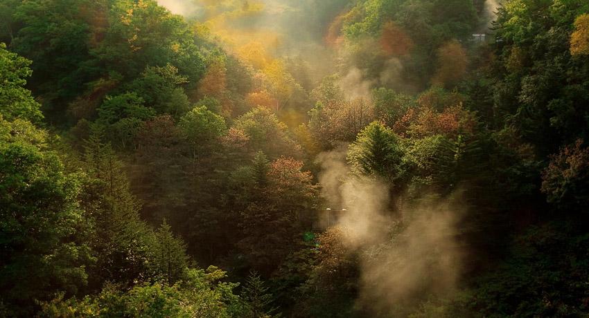 Hace 10.000 años los bosques ocupaban entre el 80 y el 90% de la superficie terrestre.