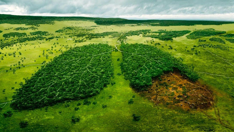 La deforestación influye en el aumento de dióxido de carbono y la reducción del oxígeno.