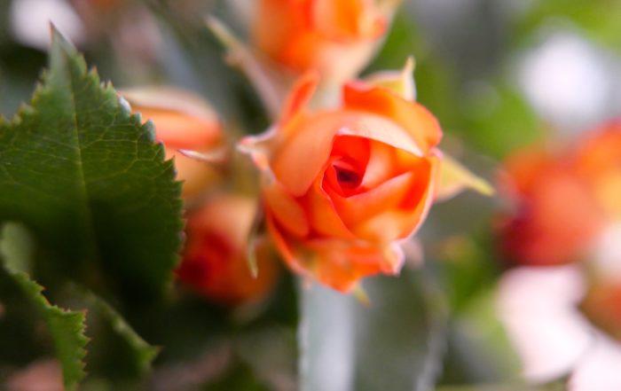 En la imagen superior, Flor y Hoja, diálogos de primavera. ¿Qué escondes flor? ¿Qué buscas Hoja?
